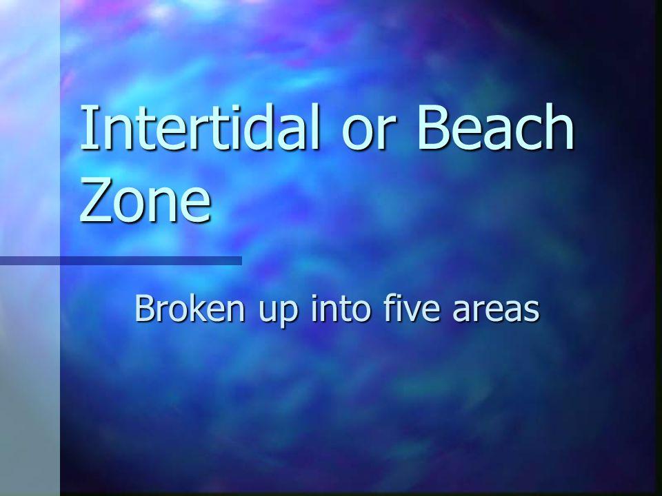 Intertidal or Beach Zone