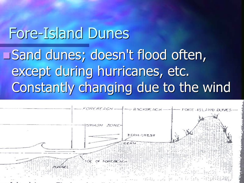Fore-Island Dunes Sand dunes; doesn t flood often, except during hurricanes, etc.