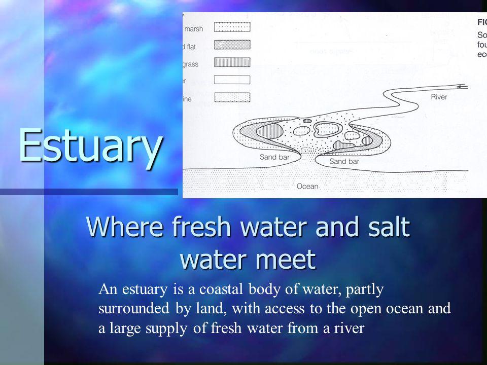 Where fresh water and salt water meet