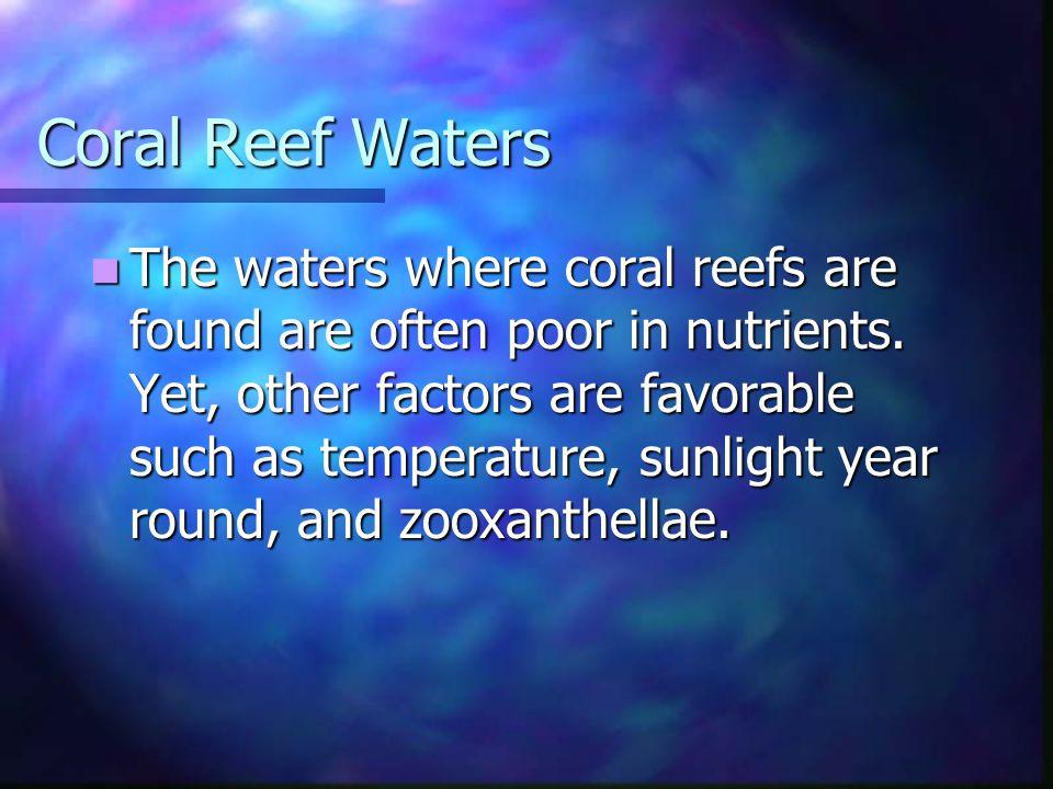 Coral Reef Waters