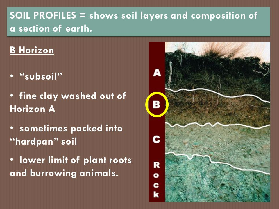 Bring some soil from your home ppt video online download for Soil profile video