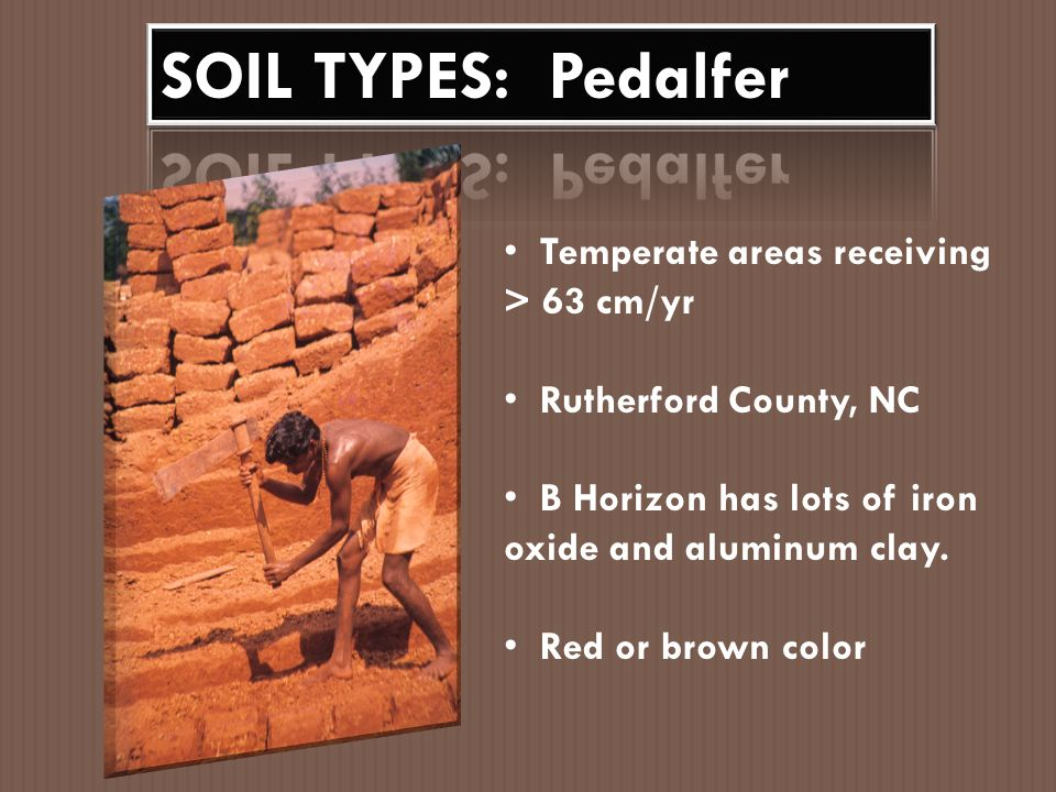SOIL TYPES: Pedalfer Temperate areas receiving > 63 cm/yr