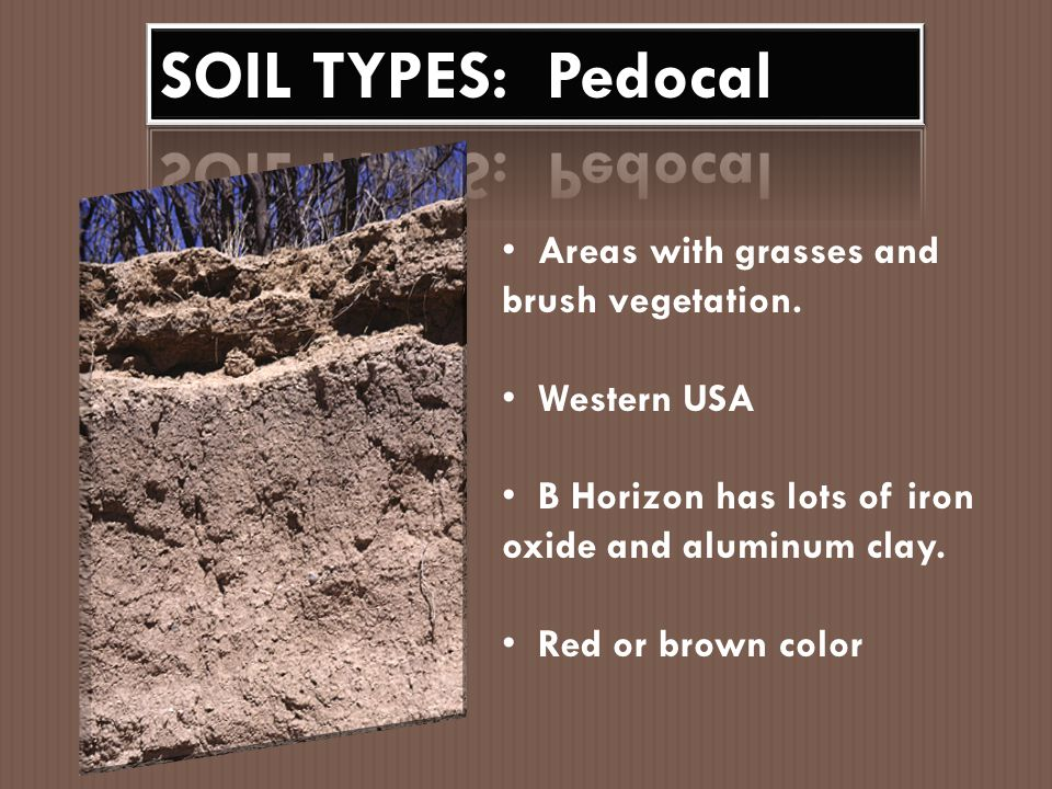 SOIL TYPES: Pedocal Areas with grasses and brush vegetation.