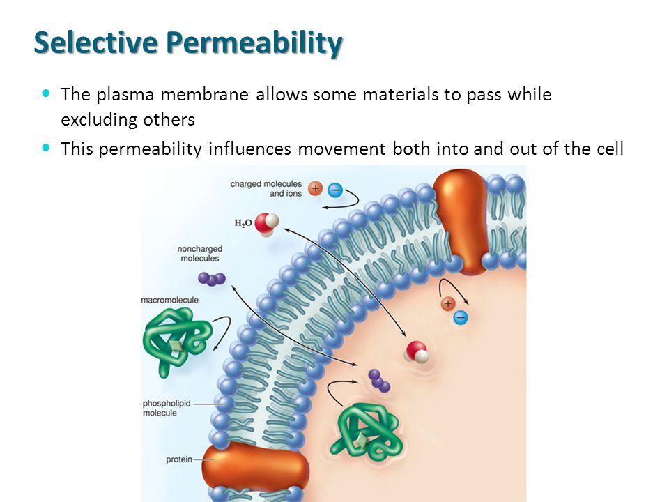 Selective Permeability