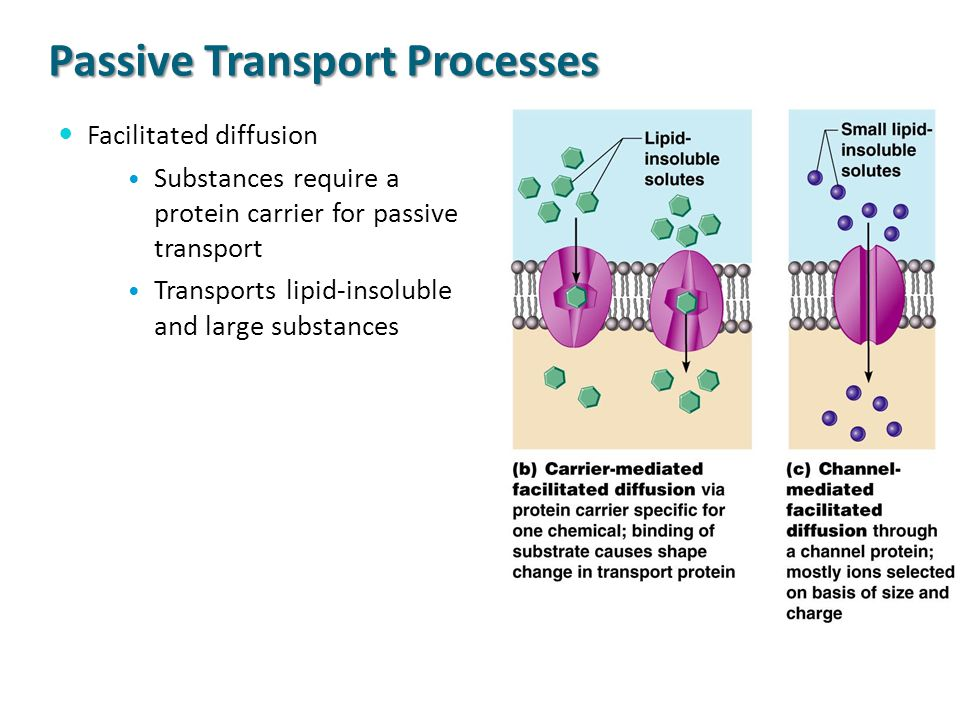 Passive Transport Processes