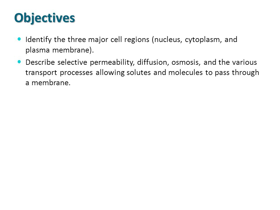Objectives Identify the three major cell regions (nucleus, cytoplasm, and plasma membrane).