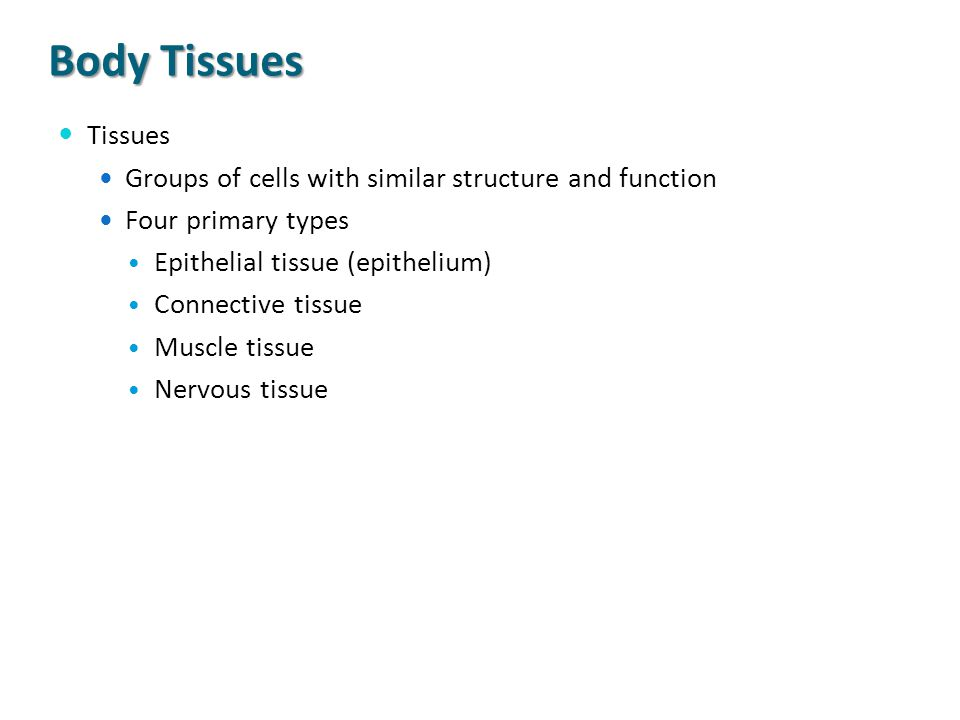 Body Tissues Tissues. Groups of cells with similar structure and function. Four primary types. Epithelial tissue (epithelium)