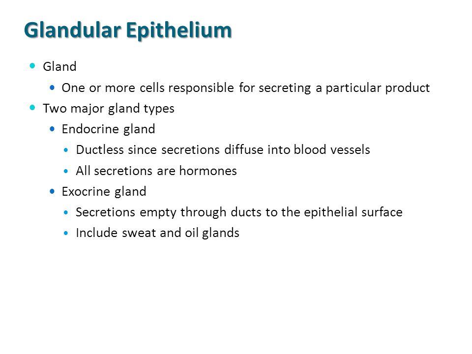 Glandular Epithelium Gland