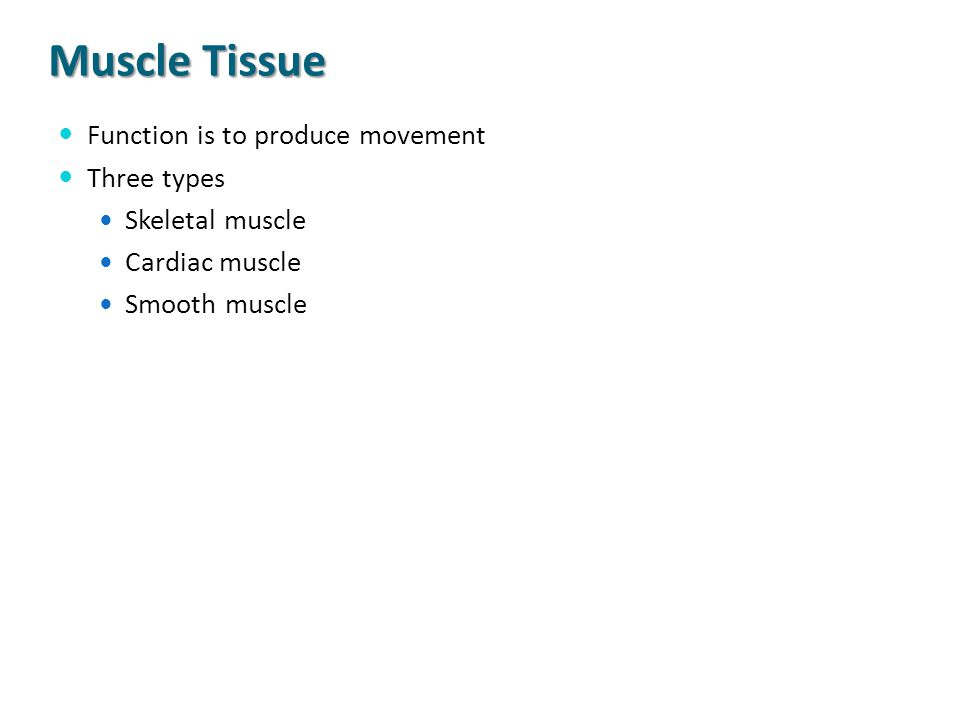 Muscle Tissue Function is to produce movement Three types