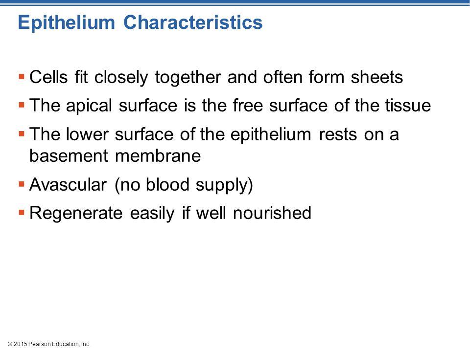 Epithelium Characteristics