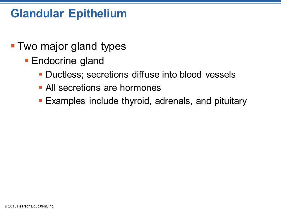 Glandular Epithelium Two major gland types Endocrine gland