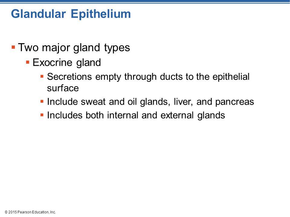Glandular Epithelium Two major gland types Exocrine gland