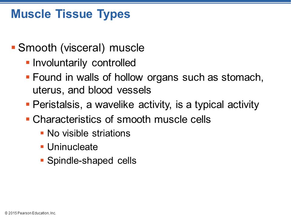 Muscle Tissue Types Smooth (visceral) muscle Involuntarily controlled