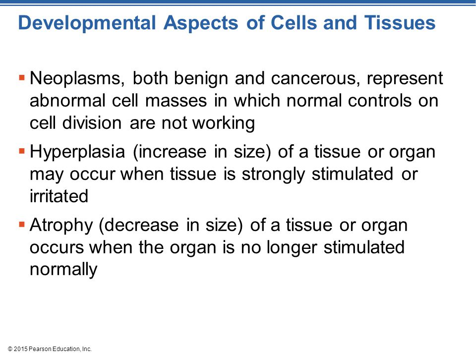Developmental Aspects of Cells and Tissues