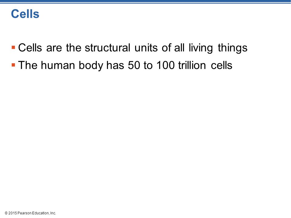 Cells Cells are the structural units of all living things