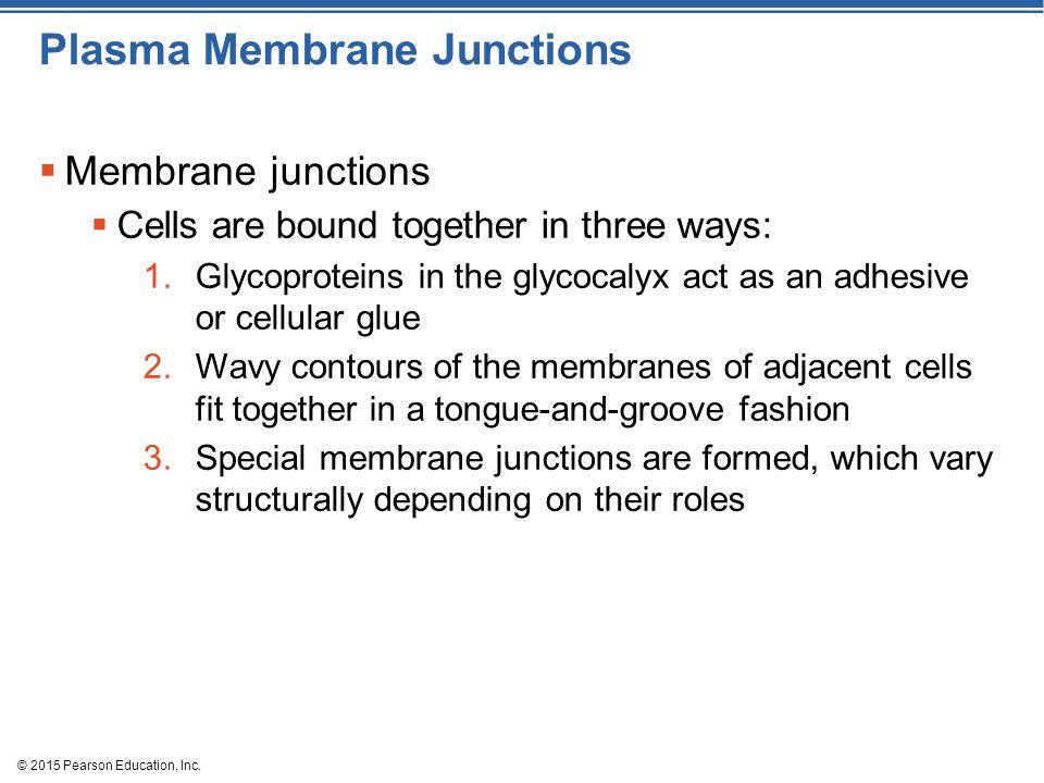 Plasma Membrane Junctions