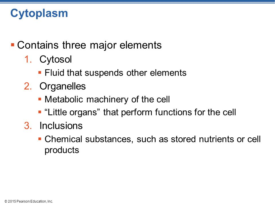 Cytoplasm Contains three major elements Cytosol Organelles Inclusions
