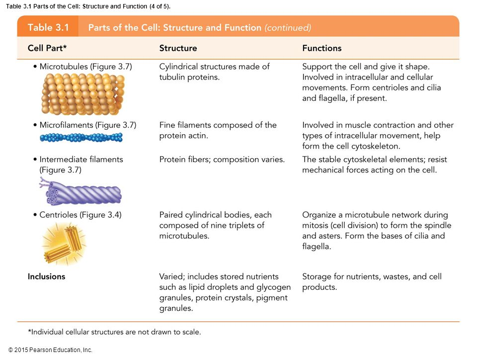 Table 3.1 Parts of the Cell: Structure and Function (4 of 5).