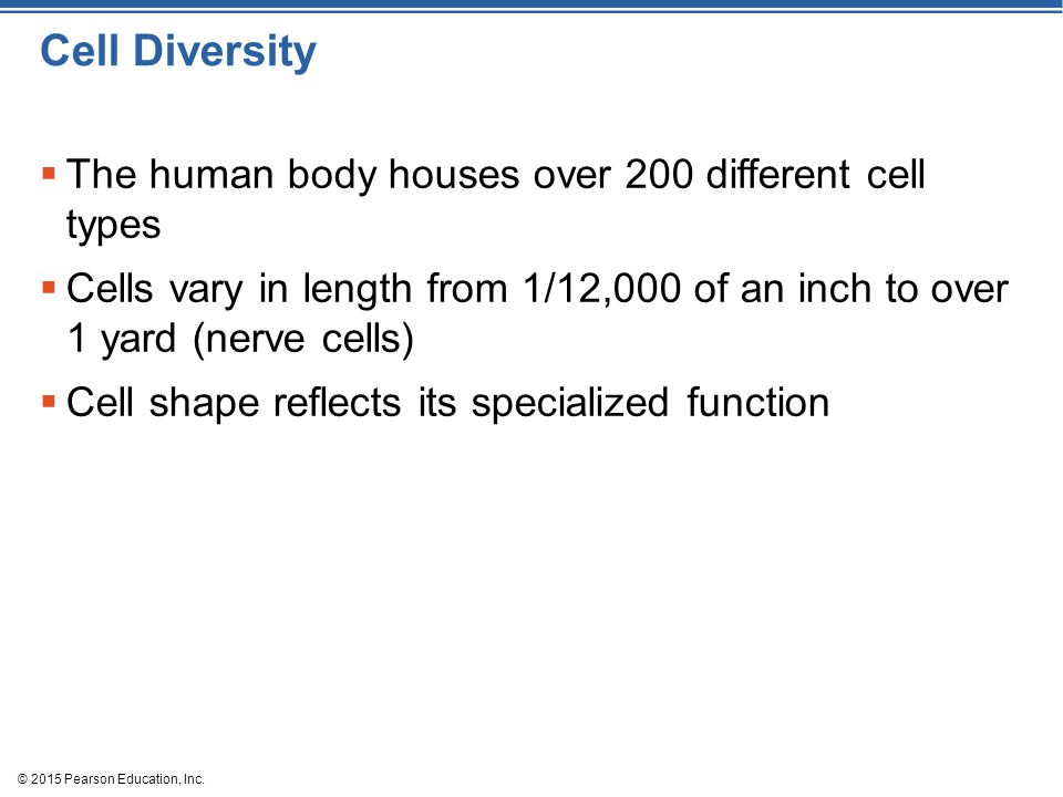 Cell Diversity The human body houses over 200 different cell types