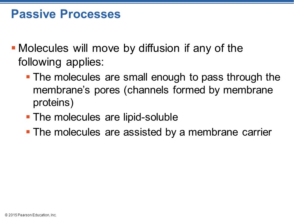Passive Processes Molecules will move by diffusion if any of the following applies: