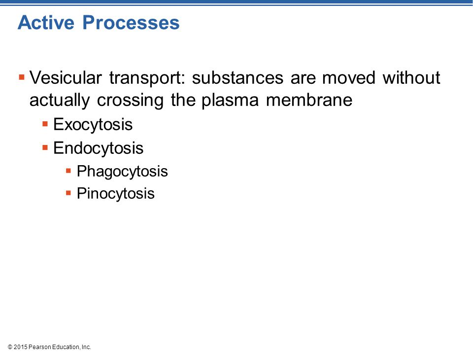 Active Processes Vesicular transport: substances are moved without actually crossing the plasma membrane.