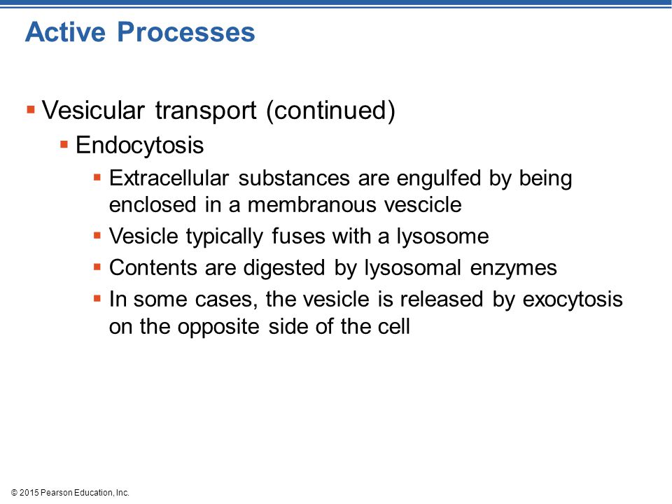 Active Processes Vesicular transport (continued) Endocytosis