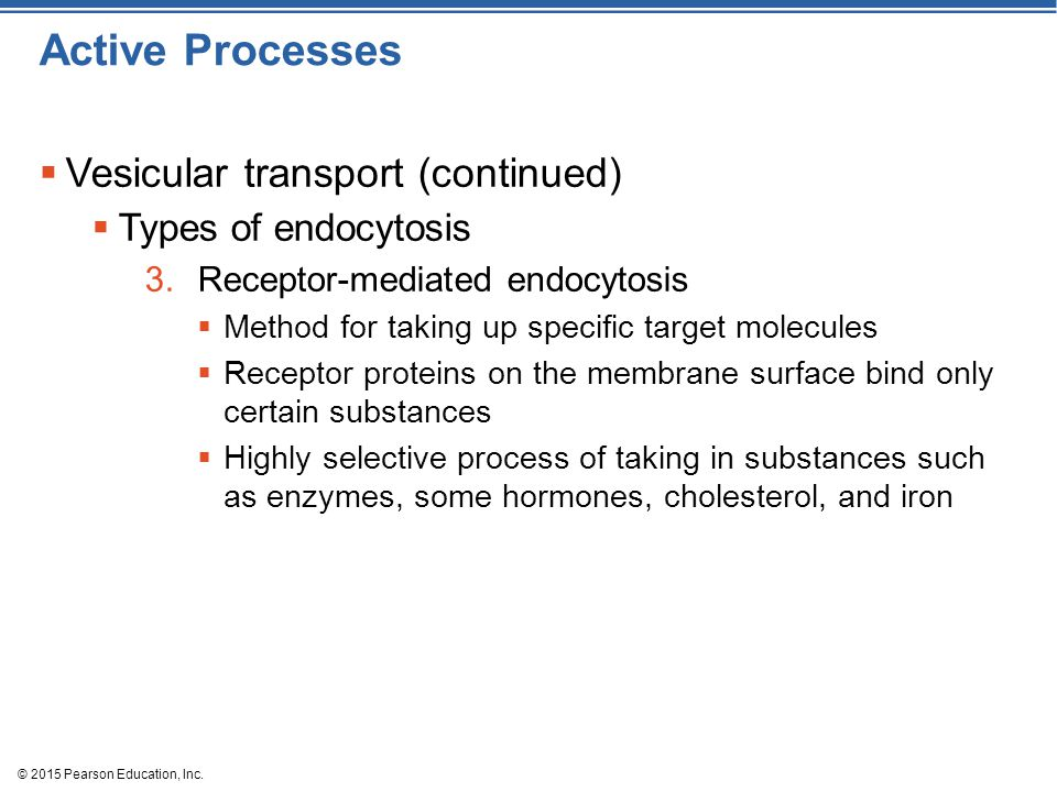 Active Processes Vesicular transport (continued) Types of endocytosis