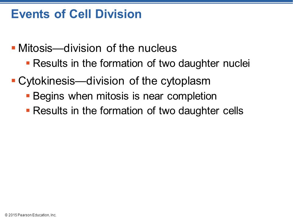 Events of Cell Division