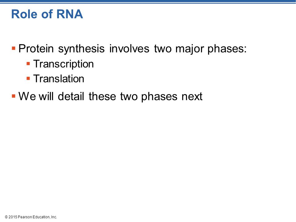 Role of RNA Protein synthesis involves two major phases: