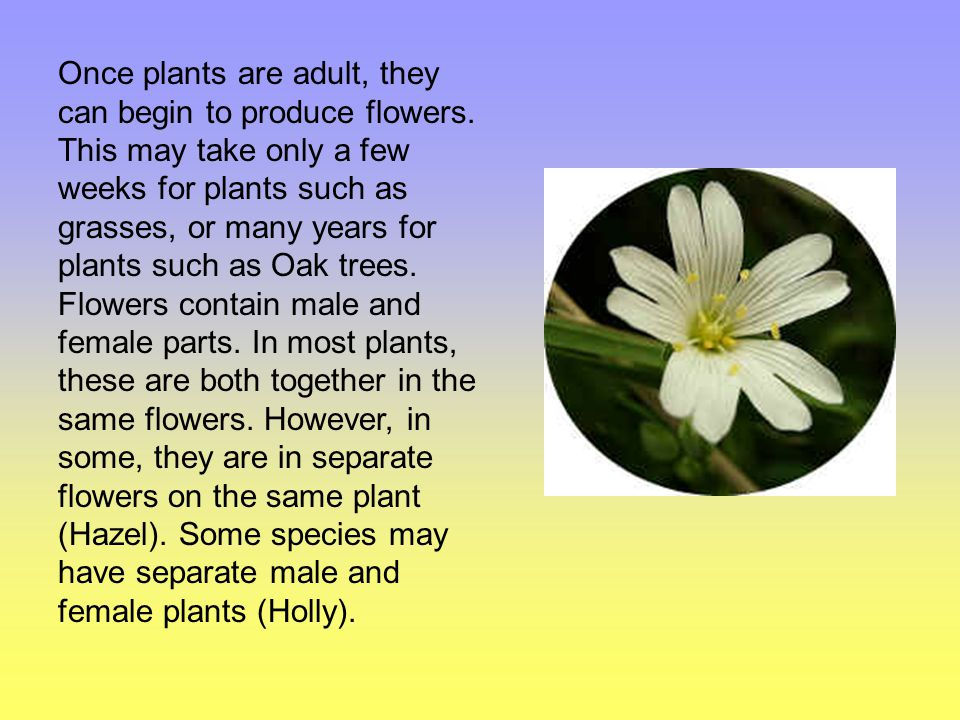 Once plants are adult, they can begin to produce flowers