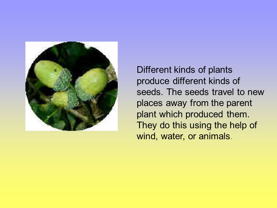 Different kinds of plants produce different kinds of seeds
