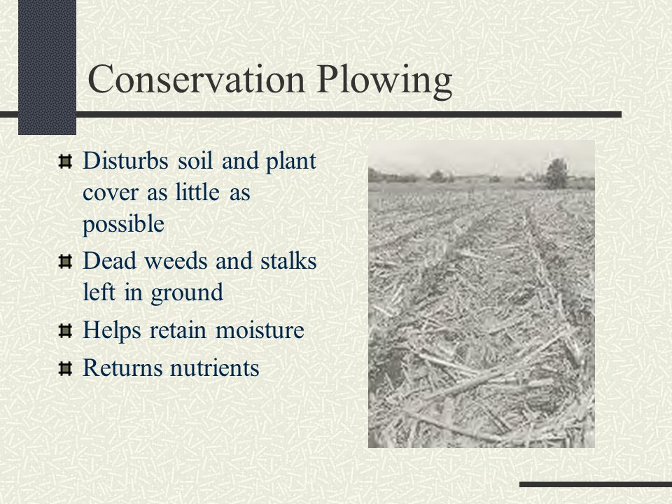 Conservation Plowing Disturbs soil and plant cover as little as possible. Dead weeds and stalks left in ground.
