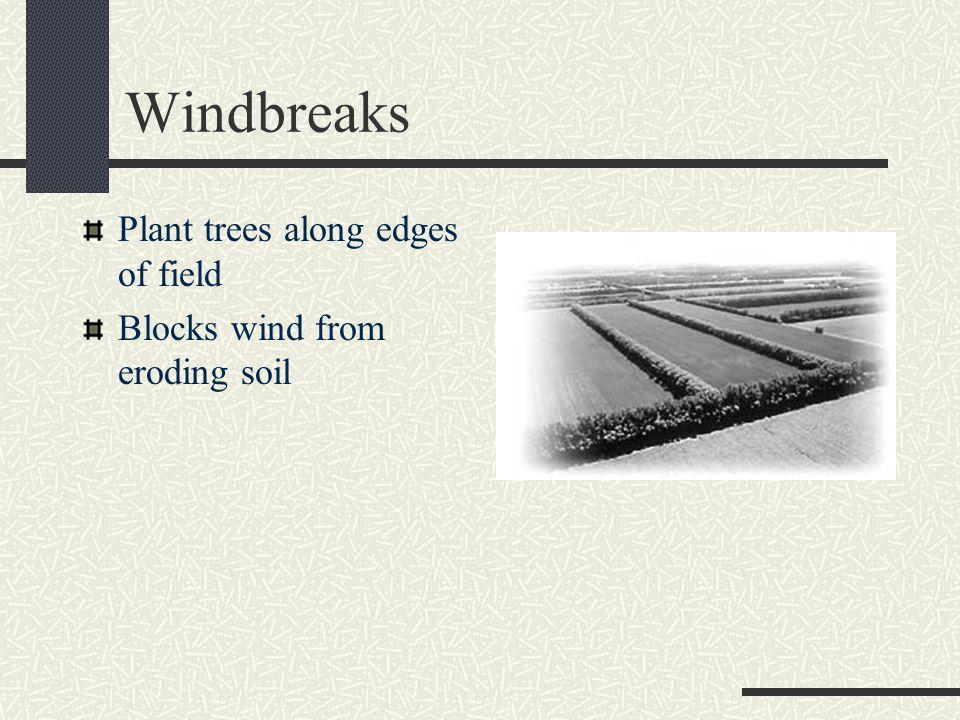 Windbreaks Plant trees along edges of field