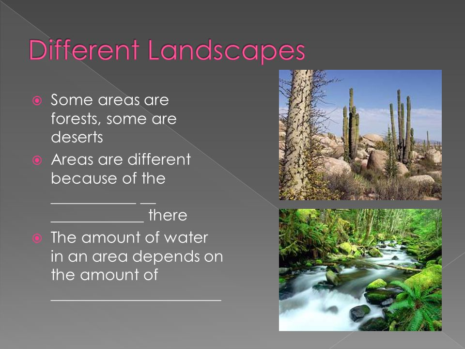 Different Landscapes Some areas are forests, some are deserts