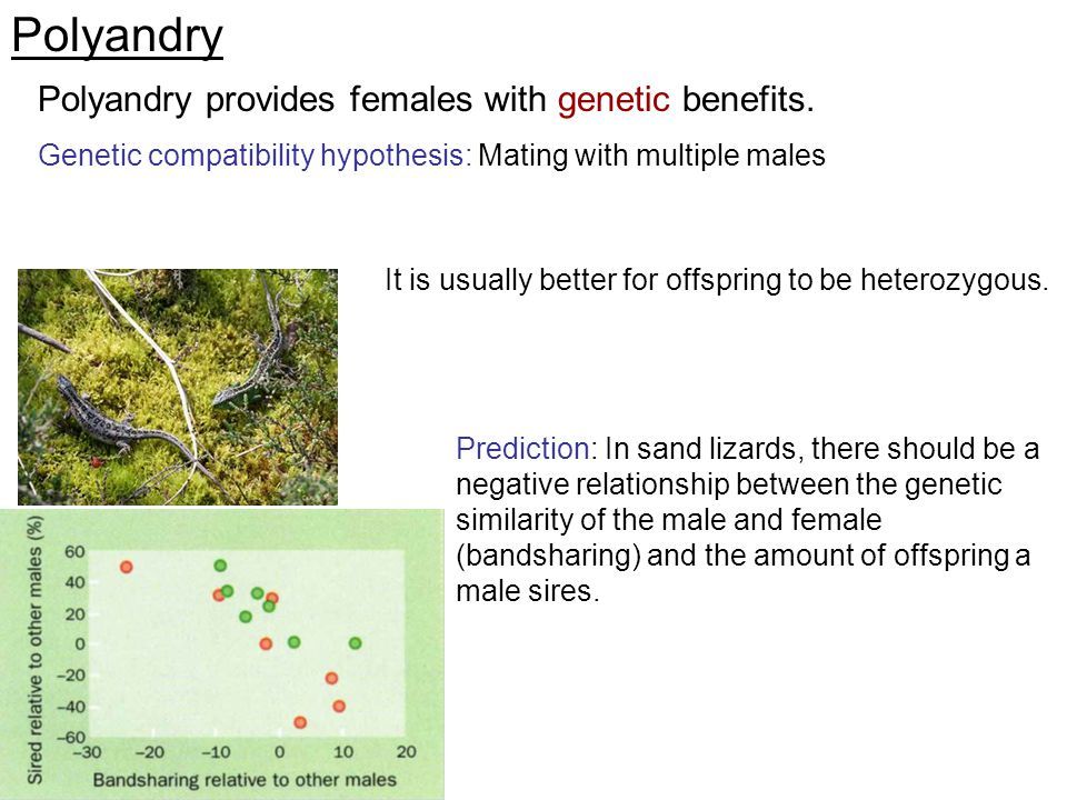 Polyandry Polyandry provides females with genetic benefits.