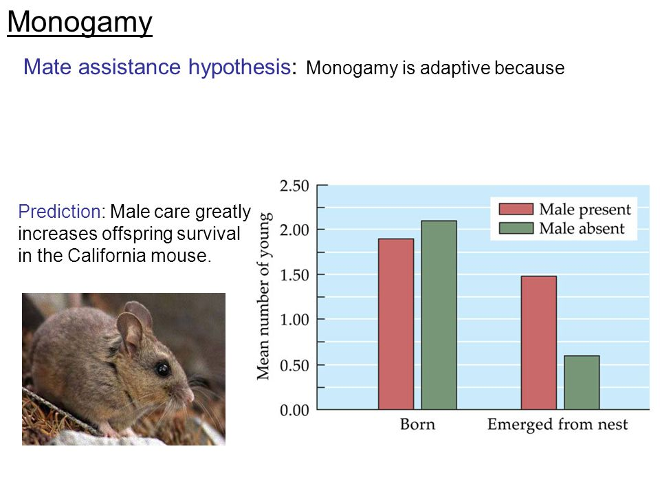 Monogamy Mate assistance hypothesis: Monogamy is adaptive because