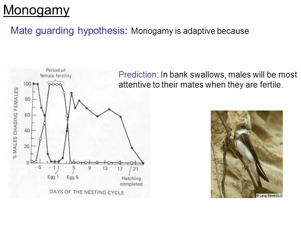Monogamy Mate guarding hypothesis: Monogamy is adaptive because