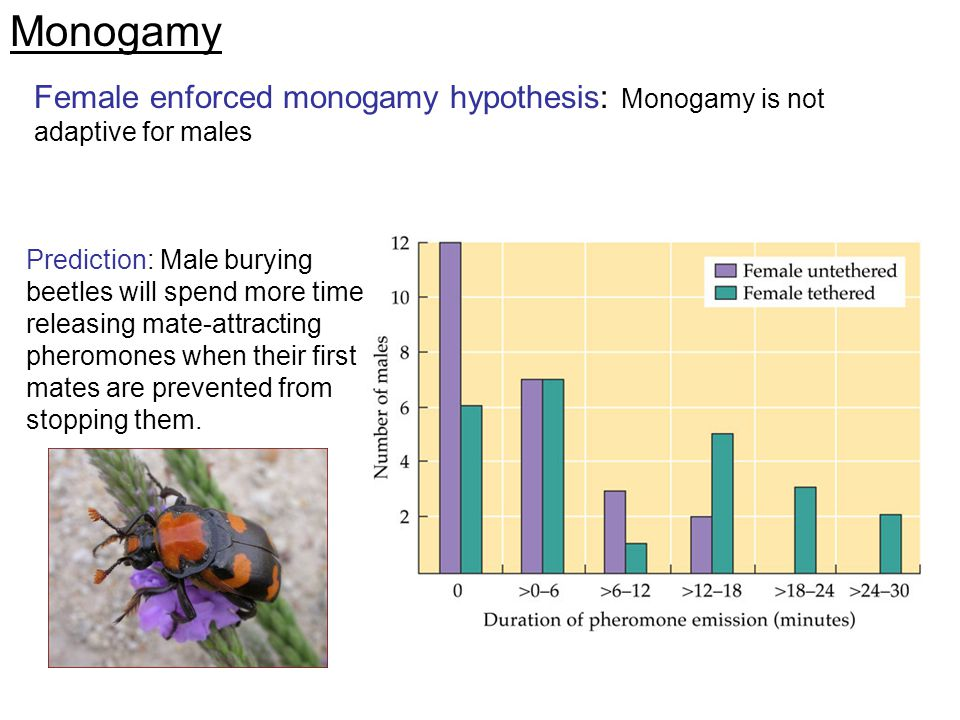 Monogamy Female enforced monogamy hypothesis: Monogamy is not adaptive for males.