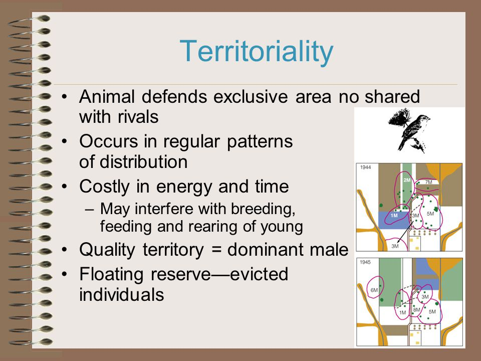 Territoriality Animal defends exclusive area no shared with rivals