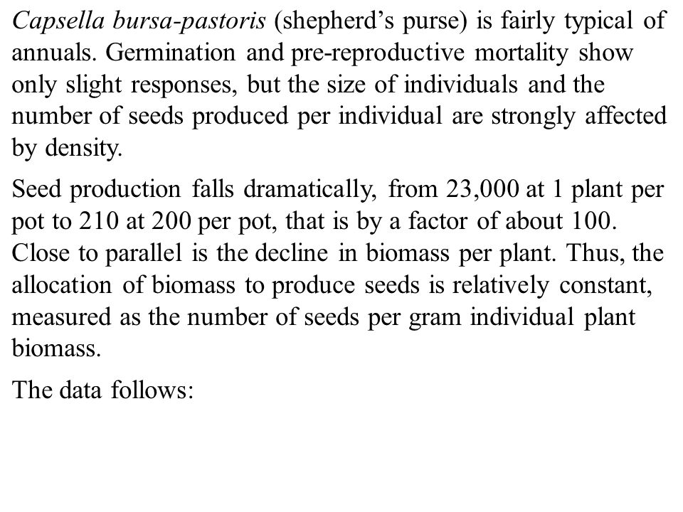Capsella bursa-pastoris (shepherd's purse) is fairly typical of annuals. Germination and pre-reproductive mortality show only slight responses, but the size of individuals and the number of seeds produced per individual are strongly affected by density.