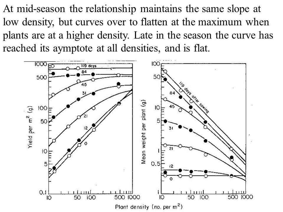 At mid-season the relationship maintains the same slope at low density, but curves over to flatten at the maximum when plants are at a higher density.