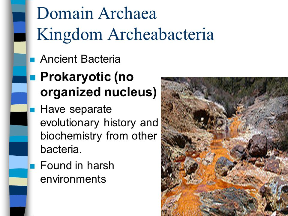 Domain Archaea Kingdom Archeabacteria