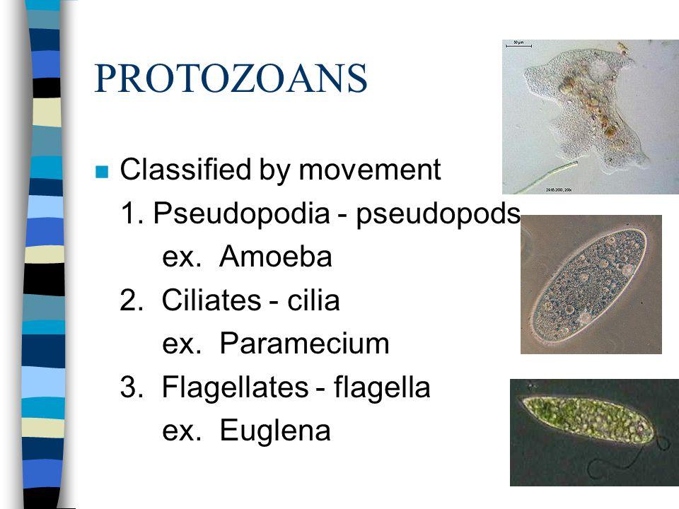 PROTOZOANS Classified by movement 1. Pseudopodia - pseudopods