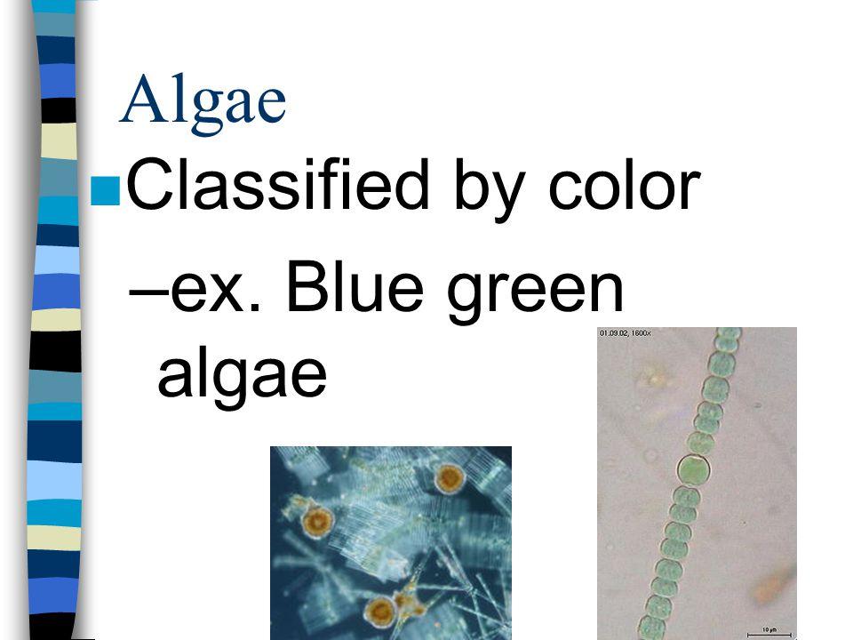 Algae Classified by color ex. Blue green algae
