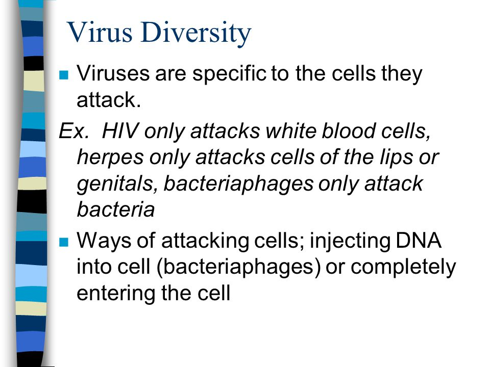 Virus Diversity Viruses are specific to the cells they attack.