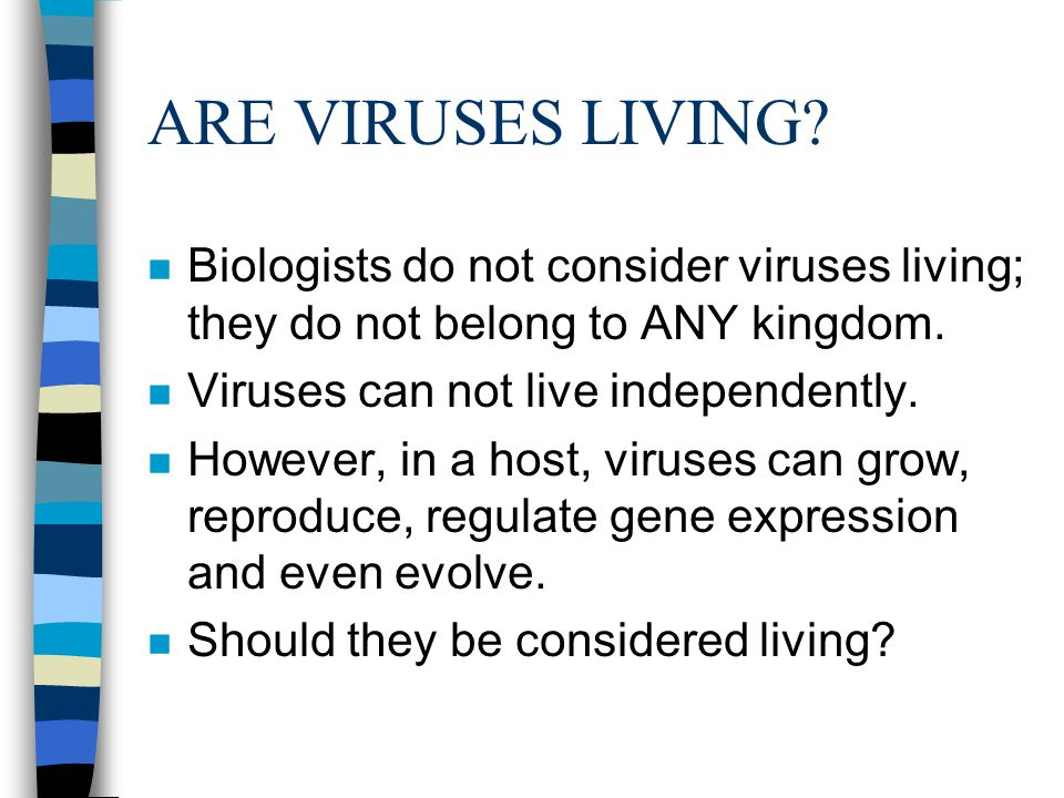ARE VIRUSES LIVING Biologists do not consider viruses living; they do not belong to ANY kingdom. Viruses can not live independently.