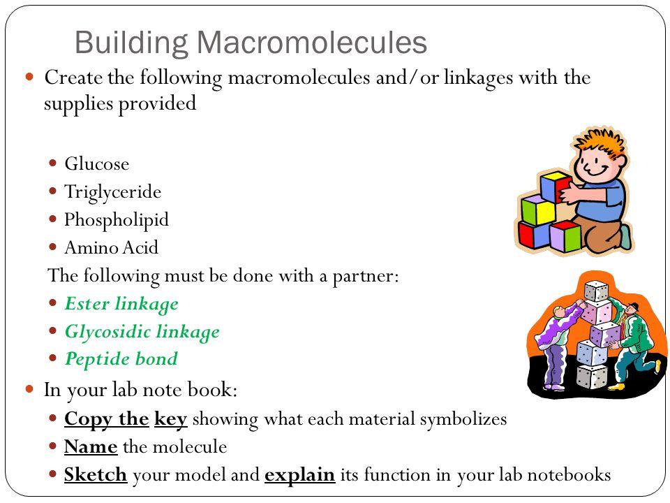 Building Macromolecules