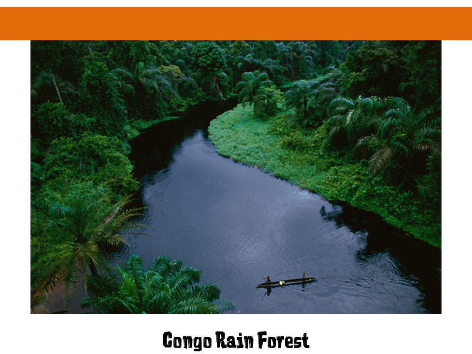 Congo Rain Forest
