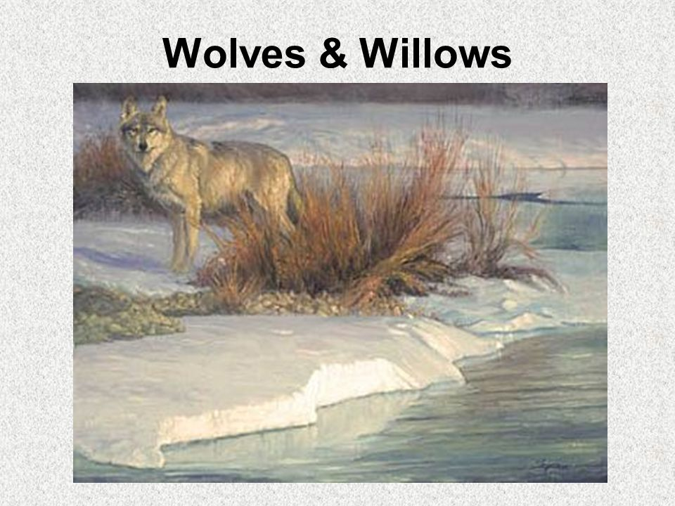 Wolves & Willows