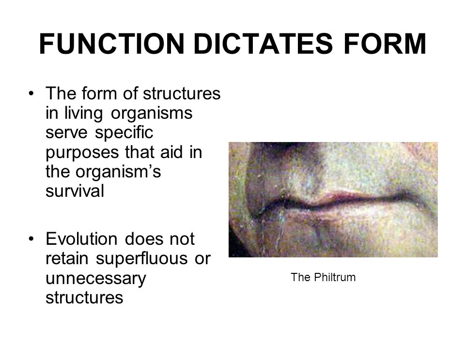 FUNCTION DICTATES FORM